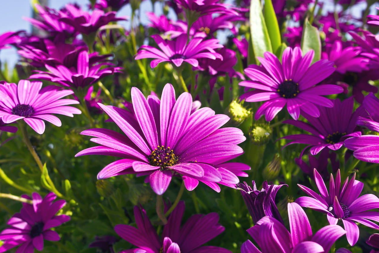 Fiori Di Stagione Settembre fiori da giardino: ordinate macchie di colore - magazine