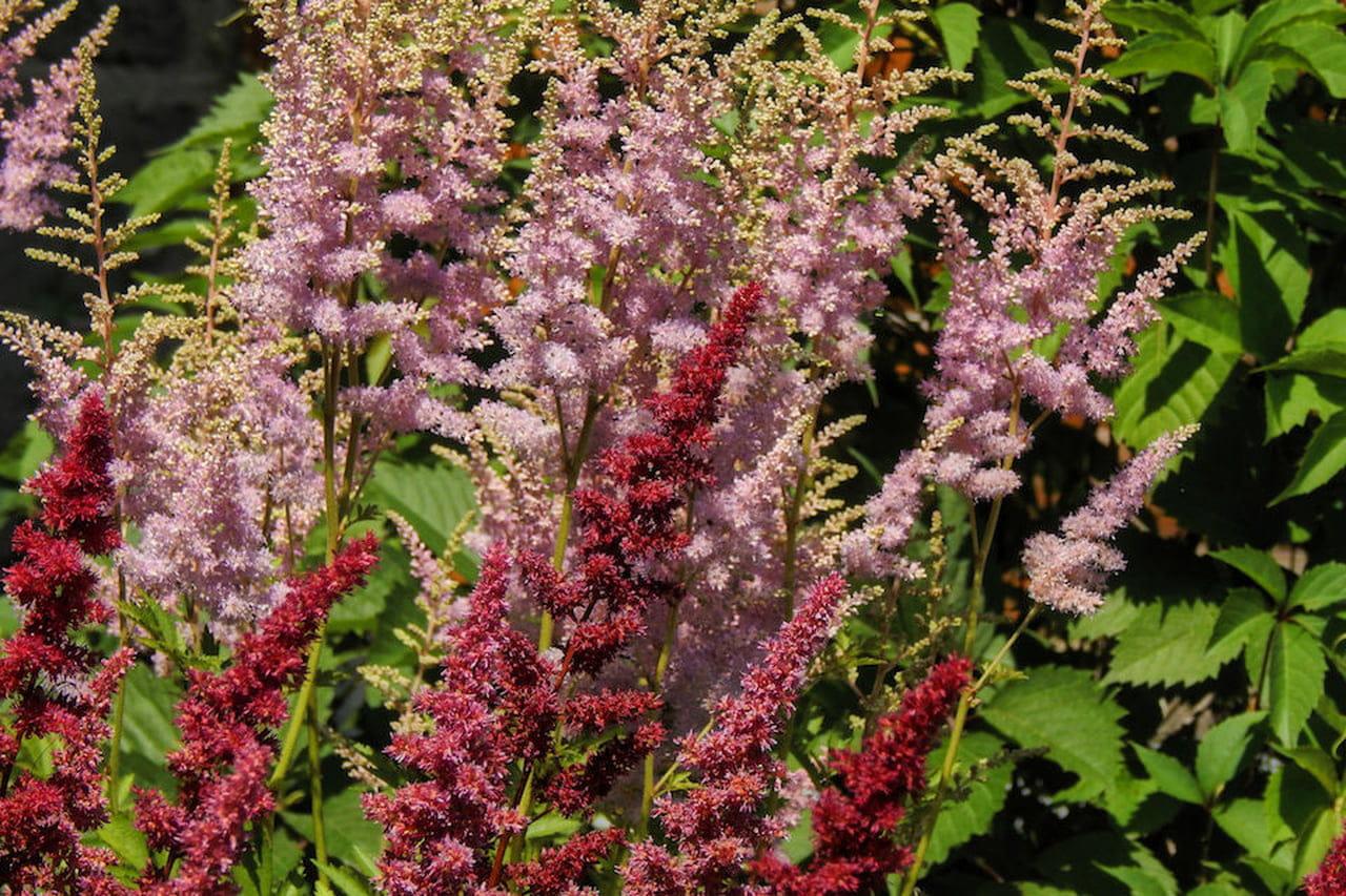 Piante Da Giardino Ombroso piante da giardino: sempreverdi, ornamentali e fiorite