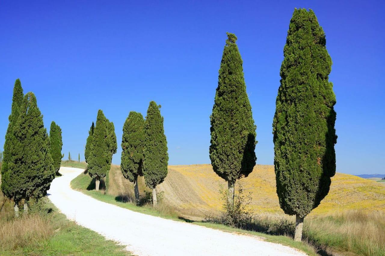 Foto Di Piante Sempreverdi alberi sempreverdi: quali sono - magazine delle donne