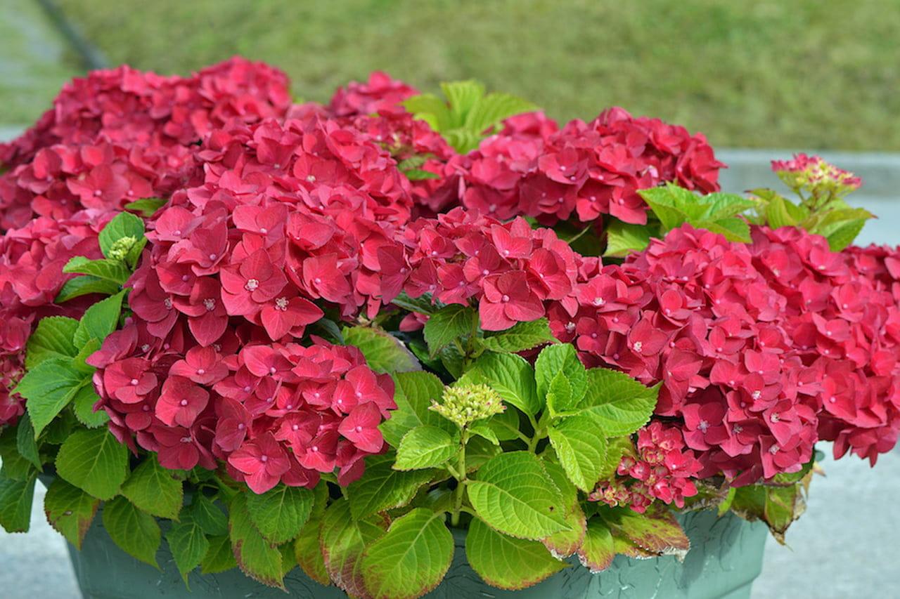 Fiori Perenni Da Balcone piante da balcone: belle, utili e profumate - magazine delle