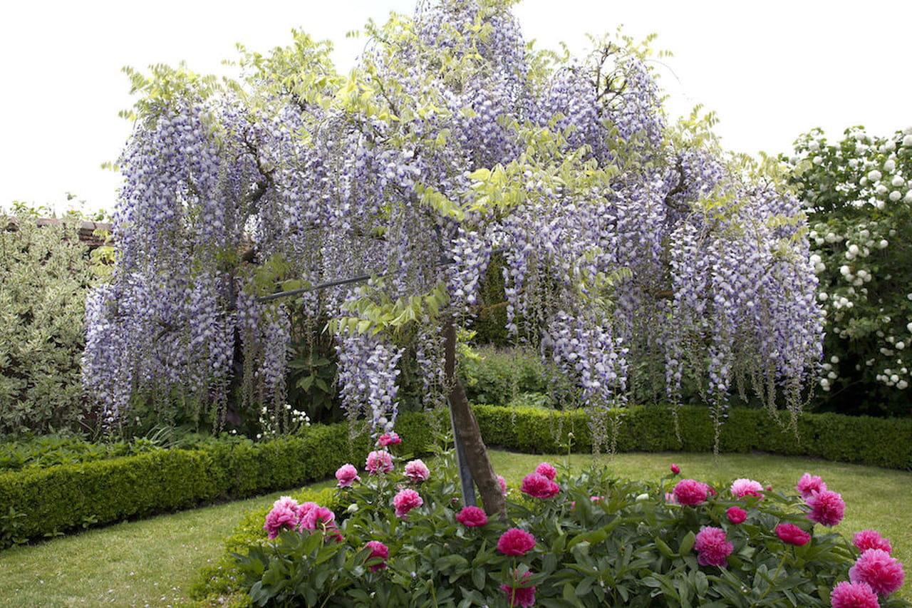 Alberi Ornamentali Da Giardino piante da giardino: sempreverdi, ornamentali e fiorite