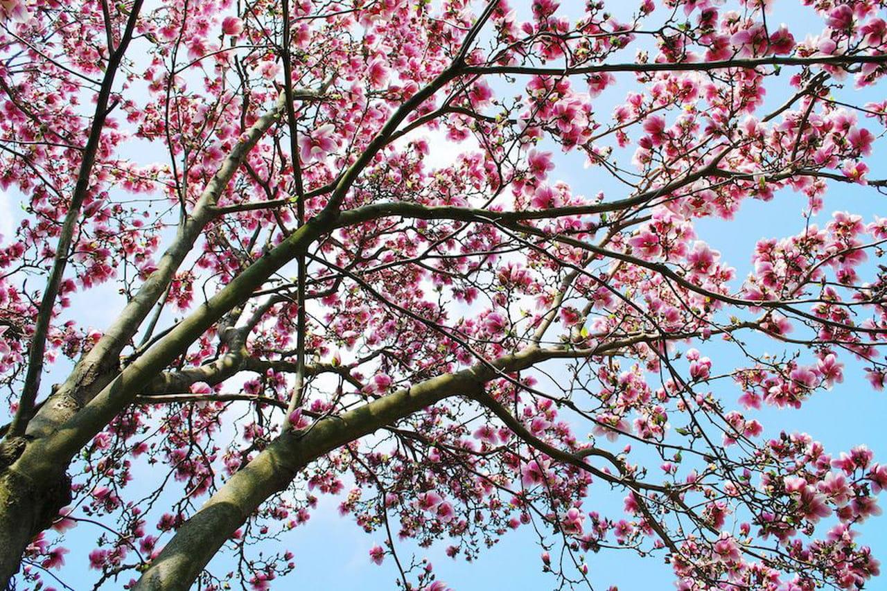 Piante da giardino sempreverdi ornamentali e fiorite