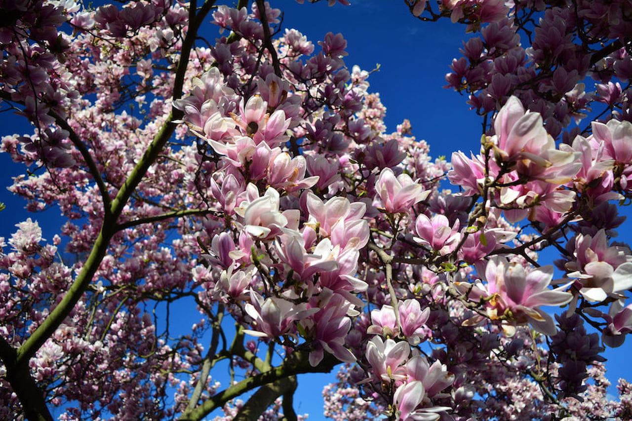 Tipi Di Piante Sempreverdi alberi sempreverdi: quali sono - magazine delle donne